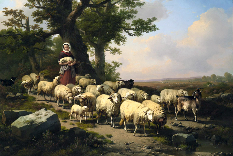 The flock restored lectionary reflection for reign of christ the flock restored lectionary reflection for reign of christ sunday ezekiel 34 fandeluxe Gallery