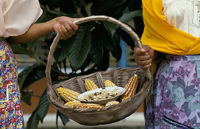 Women Holding a Basket of Corn.