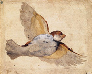 Study of a Flying Sparrow.