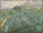 Wheat Field in Rain.
