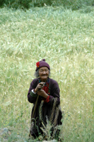 Local Woman in a Barley Field.   Click to enter image viewer  Use the Save buttons below to save any of the available image sizes to your computer.