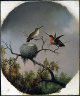 Hummingbirds with Nest.  Heade, Martin Johnson, 1819-1904  Click to enter image viewer  Use the Save buttons below to save any of the available image sizes to your computer.