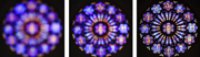 Coming into focus - Rose window.   Click to enter image viewer  Use the Save buttons below to save any of the available image sizes to your computer.
